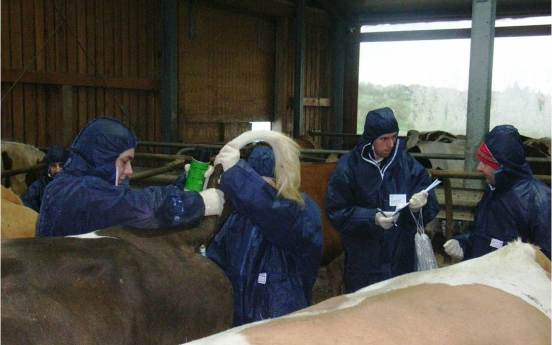 Projekt Tierseuchenübung 2013